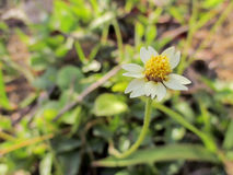 fiore del litlle Fotografia Stock Libera da Diritti