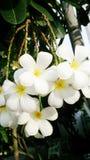 Fiore del mazzo Fotografie Stock