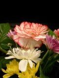 Fiore del mazzo Fotografia Stock Libera da Diritti