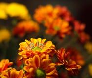 fiore del messaggio di amore Immagini Stock Libere da Diritti