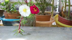 Fiore del mio giardino fotografia stock