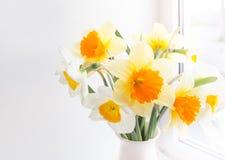 Fiore del narciso Fotografia Stock