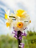 Fiore del narciso in natura Immagini Stock Libere da Diritti