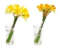 Fiore del narciso in vaso di vetro Fotografia Stock