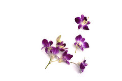 fiore del orichid con le banane Fotografie Stock