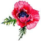 Fiore del papavero del Wildflower in uno stile dell'acquerello isolato Fotografie Stock