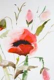 Fiore del papavero dell'acquerello Fotografia Stock Libera da Diritti
