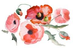 Fiore del papavero dell'acquerello Fotografia Stock