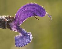 fiore del particolare Fotografia Stock Libera da Diritti