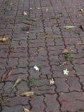 fiore del passaggio pedonale fotografia stock