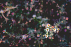 Fiore del primo piano Fotografie Stock Libere da Diritti
