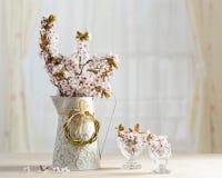 Fiore del Prunus Immagini Stock Libere da Diritti