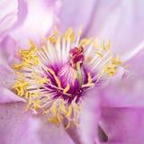 Fiore del resto Immagini Stock