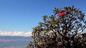 Fiore del rododendro su un albero stock footage
