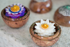 Fiore del sapone di Lotus, ricordo Fotografia Stock Libera da Diritti