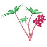 Fiore del seme di ricino Immagini Stock