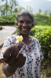 Fiore del tè nella mano della raccoglitrice tradizionale del tè Fotografia Stock Libera da Diritti