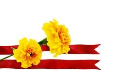 Fiore del tagete con il nastro rosso su un bianco Fotografia Stock