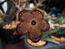 Fiore del tappeto persiano Immagine Stock Libera da Diritti