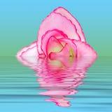 Fiore del tessuto su acqua Fotografia Stock