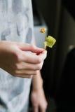 Fiore del tiglio Immagine Stock
