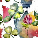 Fiore del trifoglio del Wildflower in un modello di stile dell'acquerello illustrazione di stock