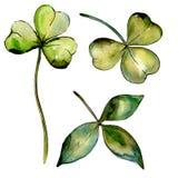 Fiore del trifoglio del Wildflower in uno stile dell'acquerello isolato Fotografia Stock