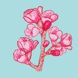 Fiore delicato della molla di vettore su fondo Fotografia Stock