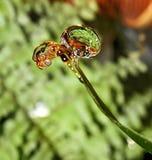 Fiore dell'acqua. Fotografia Stock Libera da Diritti