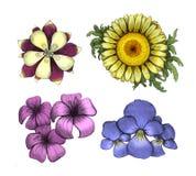 Fiore dell'acquerello Fotografia Stock