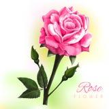 Fiore dell'acquerello Fotografie Stock
