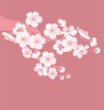 Fiore dell'albero Fotografie Stock Libere da Diritti