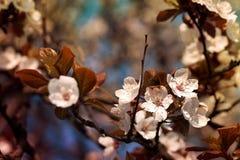 Fiore dell'albero fotografia stock
