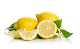Fiore dell'albero di limoni e limoni Fotografie Stock Libere da Diritti