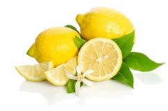 Fiore dell'albero di limoni e limoni Immagini Stock