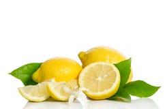Fiore dell'albero di limoni e limoni Immagini Stock Libere da Diritti