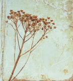 Fiore dell'annata Fotografia Stock
