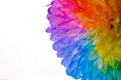 Fiore dell'arcobaleno Immagini Stock