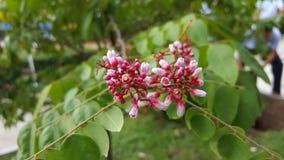 Fiore dell'artiglio dell'uccello Fotografia Stock Libera da Diritti