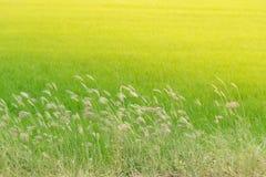 Fiore dell'erba accanto al modo Fotografia Stock Libera da Diritti
