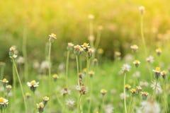 Fiore dell'erba accanto al modo Immagini Stock