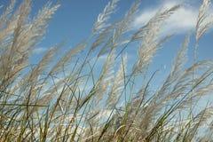 Fiore dell'erba all'angolo basso del cielo blu Fotografia Stock Libera da Diritti