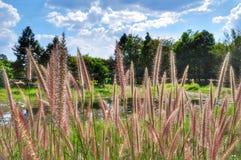 Fiore dell'erba con la nuvola del cielo blu fotografia stock