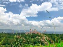 Fiore dell'erba di Desho ed erba verde con il fondo del cielo e della montagna fotografia stock libera da diritti