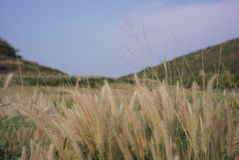 Fiore dell'erba di estate fotografia stock libera da diritti