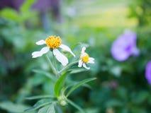 Fiore dell'erba di mattina Fotografie Stock Libere da Diritti