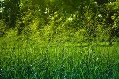 Fiore dell'erba per fondo Immagini Stock