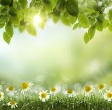 Fiore dell'estratto .chamomile di calore di estate o della primavera immagine stock
