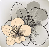 Fiore dell'ibisco, a mano disegno Illustrazione di vettore royalty illustrazione gratis