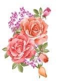 Fiore dell'illustrazione dell'acquerello Fotografia Stock